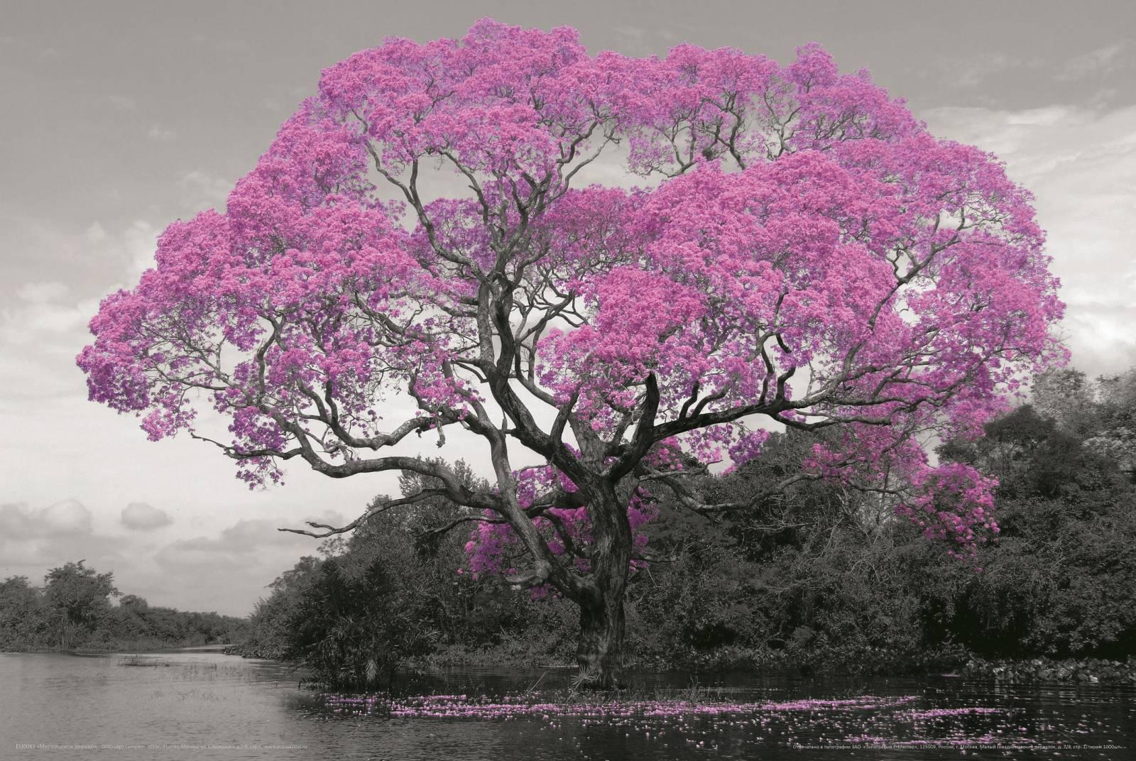 Как выглядит муравьиное дерево