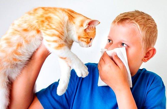 набор аллергия нсп