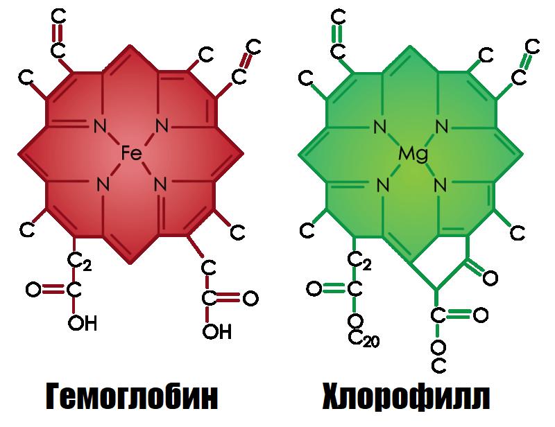 строение молекулы хлорофилла и гемоглобина