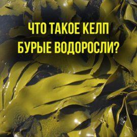 Келп — бурые водоросли